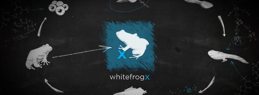 Whitefrog Design - SEO, Marketing & Design in Redlands, CA